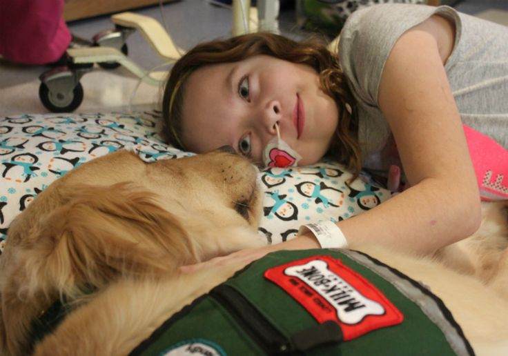 ​See two support dogs bring comfort, happiness, and emotional support to children in a hospital.