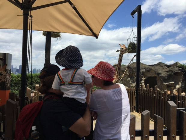 Taronga Zoo – An Orchid's View