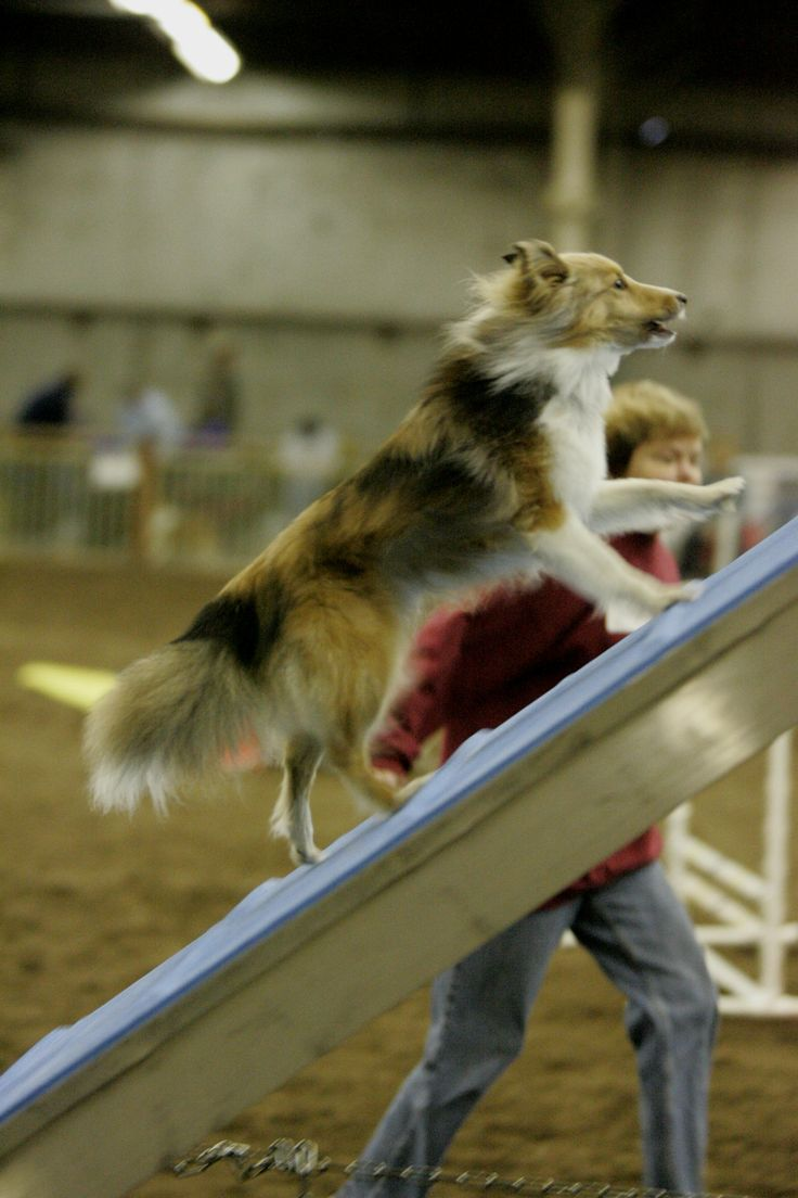What Is Dog Agility? Information for a First Time Agility Spectator