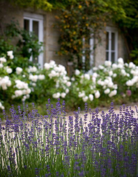 Garden Design | Nicholsons Garden Design lavender and hydrangeas
