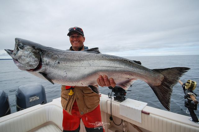 Chinook salmon at Langara Fishing Lodge. Haida Gwaii, BC #bcfishing #oceanfishing #garymcgrattenrealtor