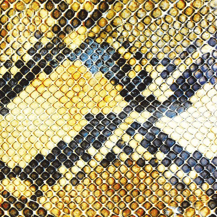 The Amazing Snakeheads - Amphetamine Ballads