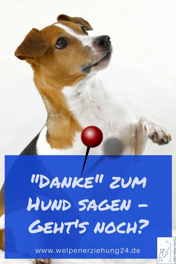 Danke Sagen Zum Hund Gehts Noch Blog Welpenerziehung Hunde