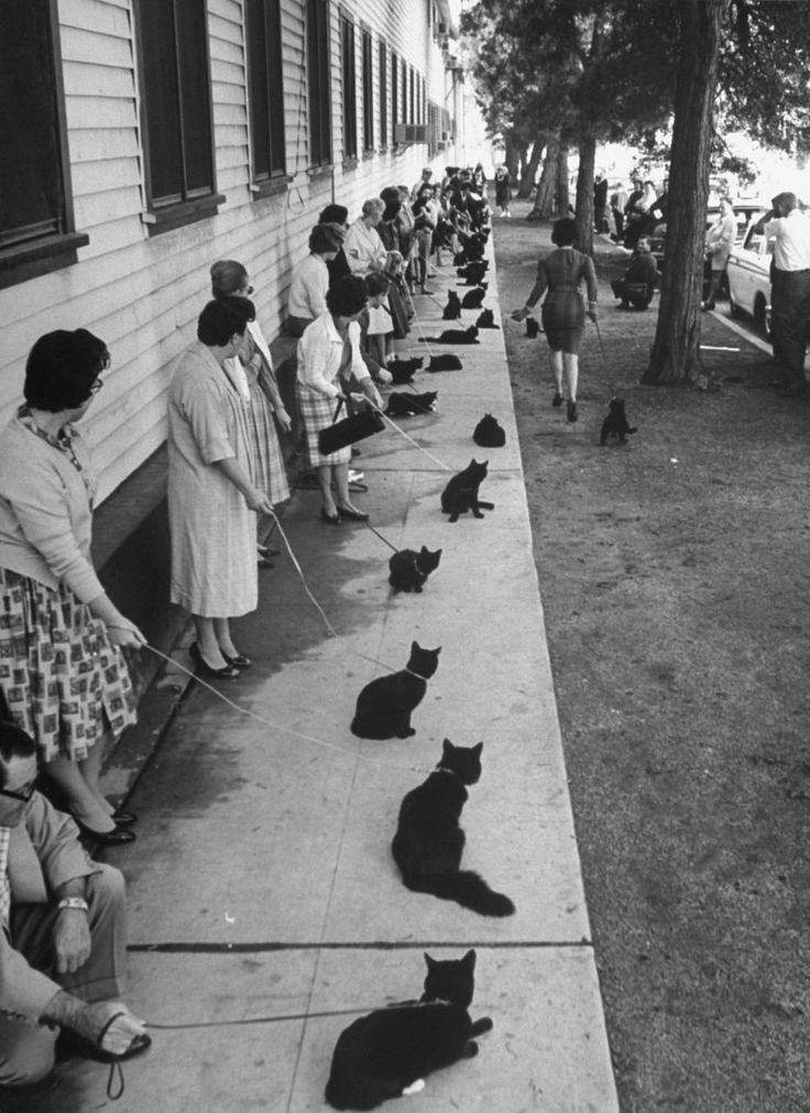 Un casting de chats noirs à Hollywood