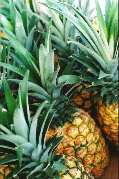 Pineapples #SS14SWIM #TotallyTropical #figleaves: Aloha, Fruit,  Anana, Food, Fruta, Tropical, Fresh Pineapple, Hawaii, Healthy Life