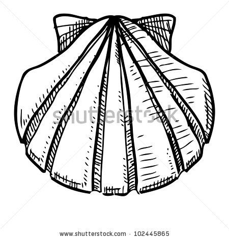 how to draw conch shell | save to a lightbox please login to organize photos in