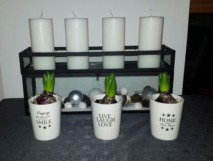 Hyacinter i kopper og adventsstage