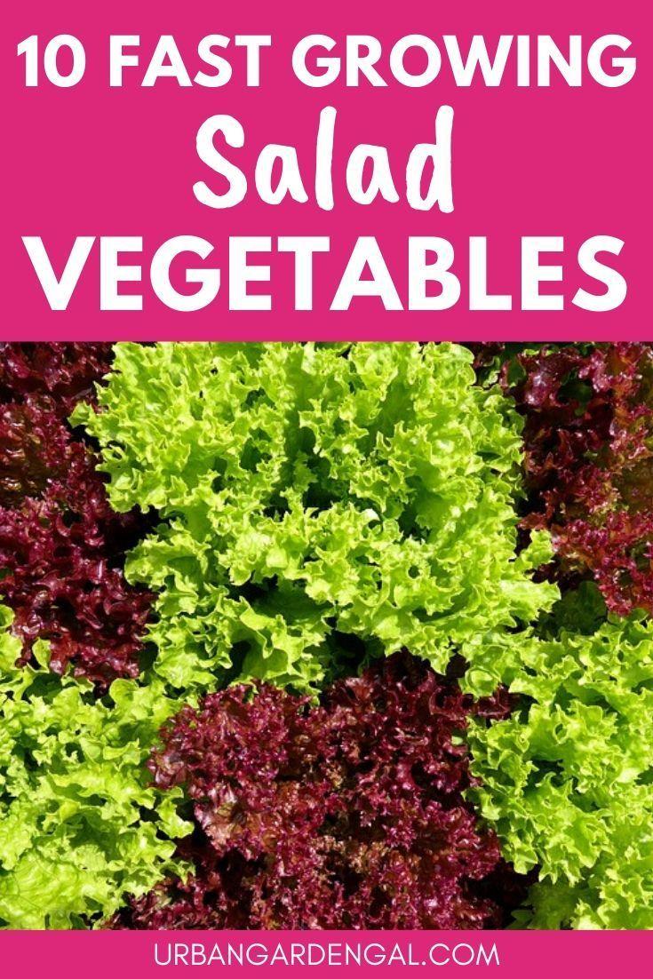 10 Fast Growing Salad Vegetables In 2020 Growing Vegetables In Pots Growing Green Beans Planting Vegetables