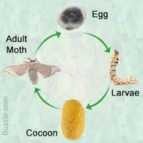 Creative writing task life cycle of silkworm