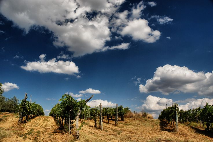 Tuscan vineyard  (by Lex van der Giessen)