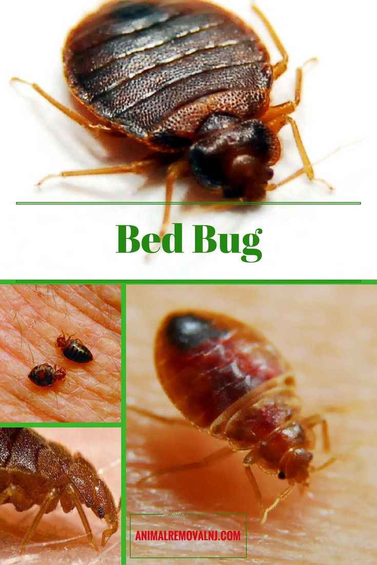 25+ unique Bed bugs signs ideas on Pinterest   Bed bugs, Bed bugs ...