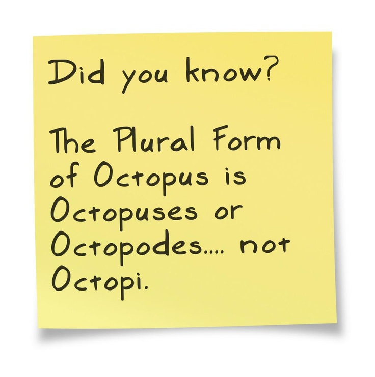 25+ best Octopus plural ideas on Pinterest | Octopuses or octopi ...
