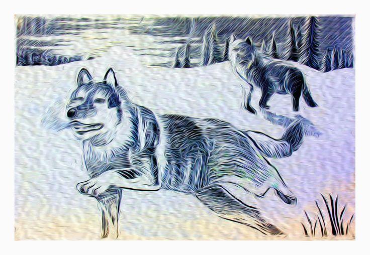 Snow wolf by Simon Knott #artist