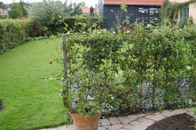Cattis och Eiras Trädgårdsdesign: Bygg väggar och rum i trädgården