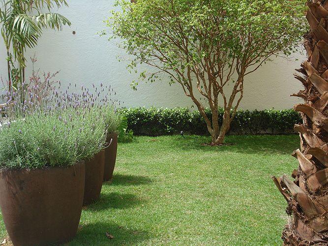 Ao pé do muro, o viburno foi utilizado como fundo para a pitanguinha, neste jardim residencial. Projeto de Marcelo Bellotto