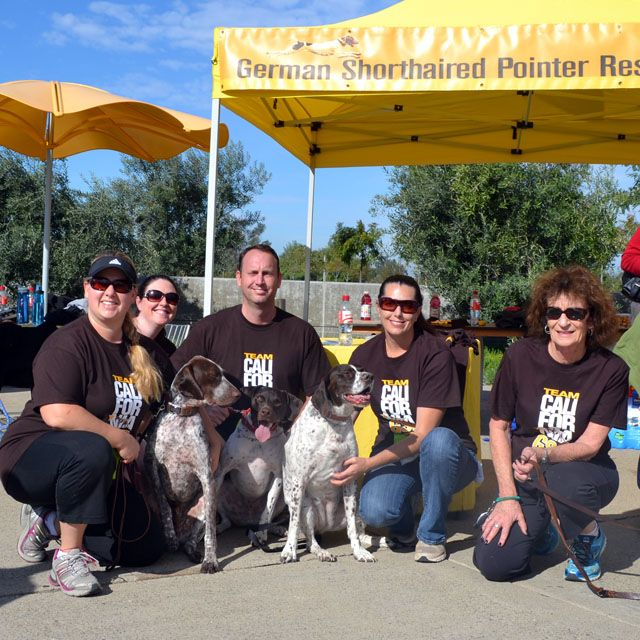 In the past, when California GSP Rescue has encountered large Vet bills, we've asked for help and, thanks to our supporters, we've always met our fundraising goal. California GSP Rescue joined the Race for the Rescues in an attempt to raise funds prior to any medical emergencies or other financial obligations we might encounter while …