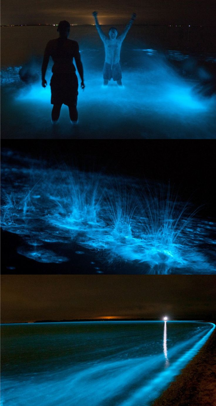 'The Glowing Lake' Gippsland Lakes in Victoria, Australia glow #travel #experience #bioluminescence