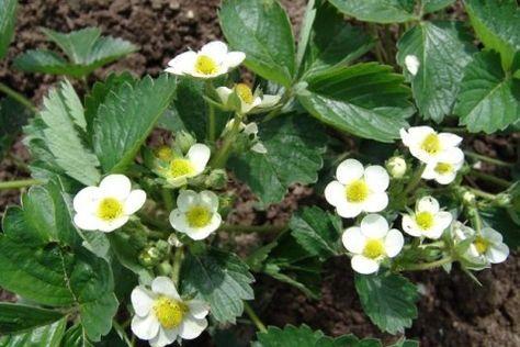 Шпаргалка для садовода июнь