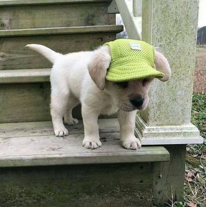 What could be cuter than a puppy in a hat!? When I get a puppy it will need one of these Machiko Puppy Hats.