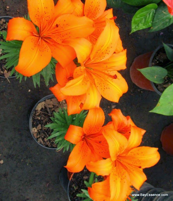 Flowers | Xochimilco's Floating Gardens | www.bayessence.com