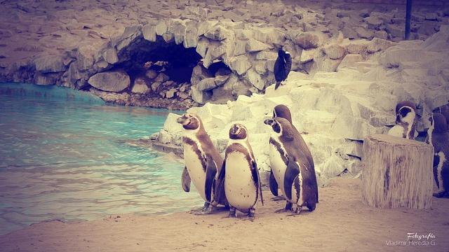 Visita a los pinguinitos