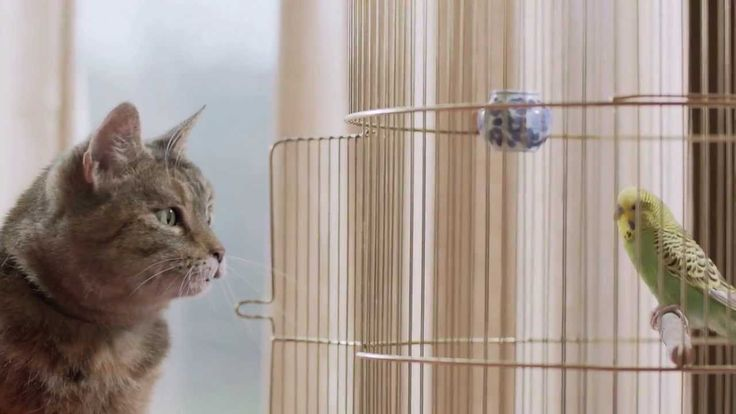 Freeview TV Ad - Cat & Budgie #catandbudgie. My absolute fave advert ever. Marving gaye and tamny terrell