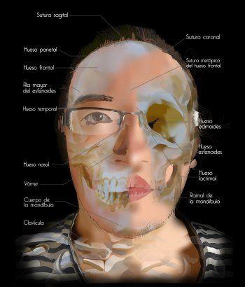 Sistema oseo cráneo.