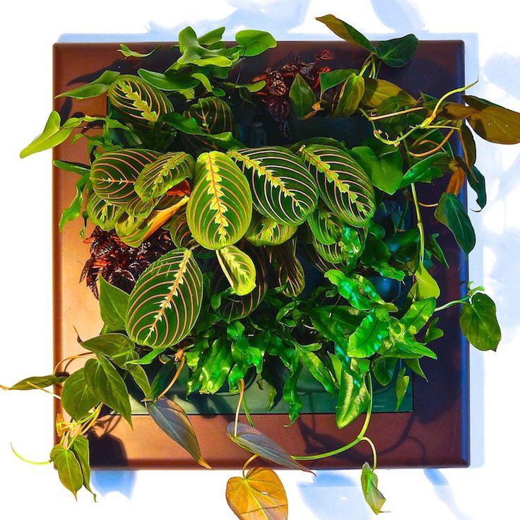 Фитокартины Flowall   фитостены   фитомодули #vertical_garden #greenwall #livingwall #Green_Wall #minigarden #фитокартины #фитостены #Flowall #Artificial_Green_Walls #Garden_Decorating #Garden_ideas  #Best_Gardening