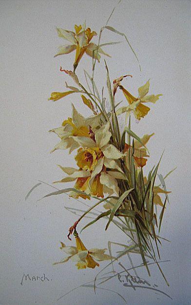 690 Best Vintage Daffodil Images On Pinterest Daffodils