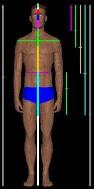 Human body showing the Divine proportion, phi or golden ratio throughout its dimensions.  This is very useful for those of us who design and sew. see website http://www.goldennumber.net/human-body/