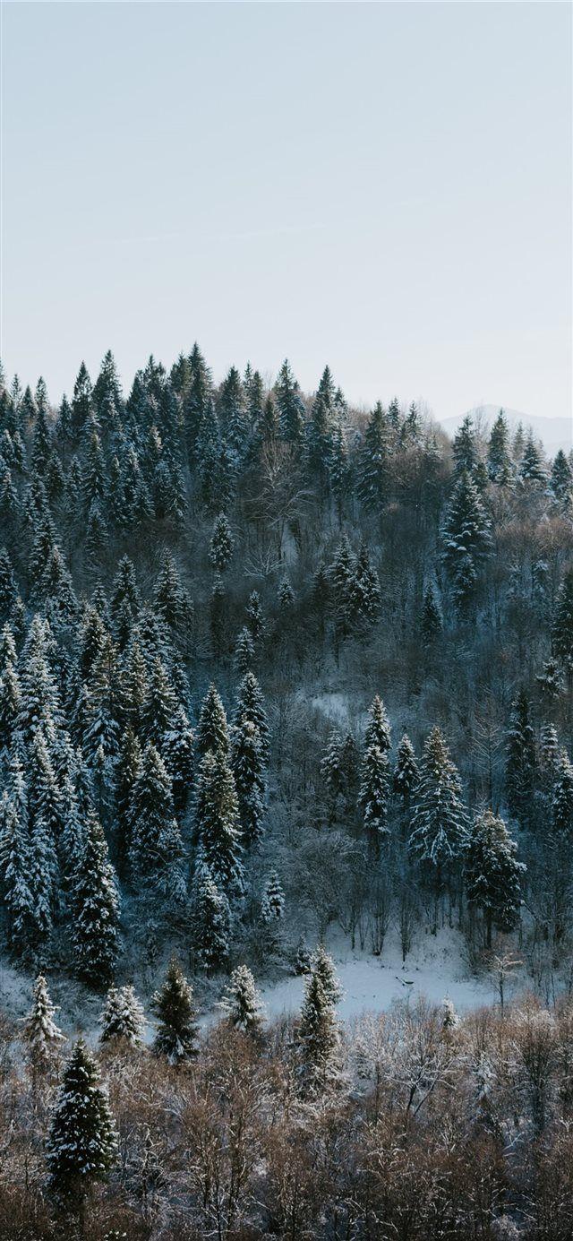 Winter wonderland iphone x wallpaper tree winter forest - Pine tree wallpaper iphone ...