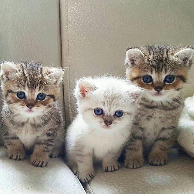 @cats_toffy_oggy Happy  International Women's day ❤️ ➖➖➖➖➖➖➖➖➖➖➖➖➖➖➖ Tag A #crazycatlady ❤️ ➖➖➖➖➖➖➖➖➖➖➖➖➖➖➖ #cat #cats #kedi #katze #kat #แมว #猫 #貓 #고양이 #Кот #котэ #котик #кошка #chat #neko #gato #gatti #gatto #gatos #kitties #katt #meow #miau #kucing #calico #kawaii #instacat #mycat #catloverscatsarepawsome2016/03/09 06:00:35