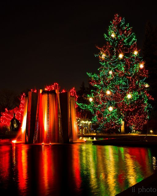 Christmas In Denver Colorado Blossoms Of Light At