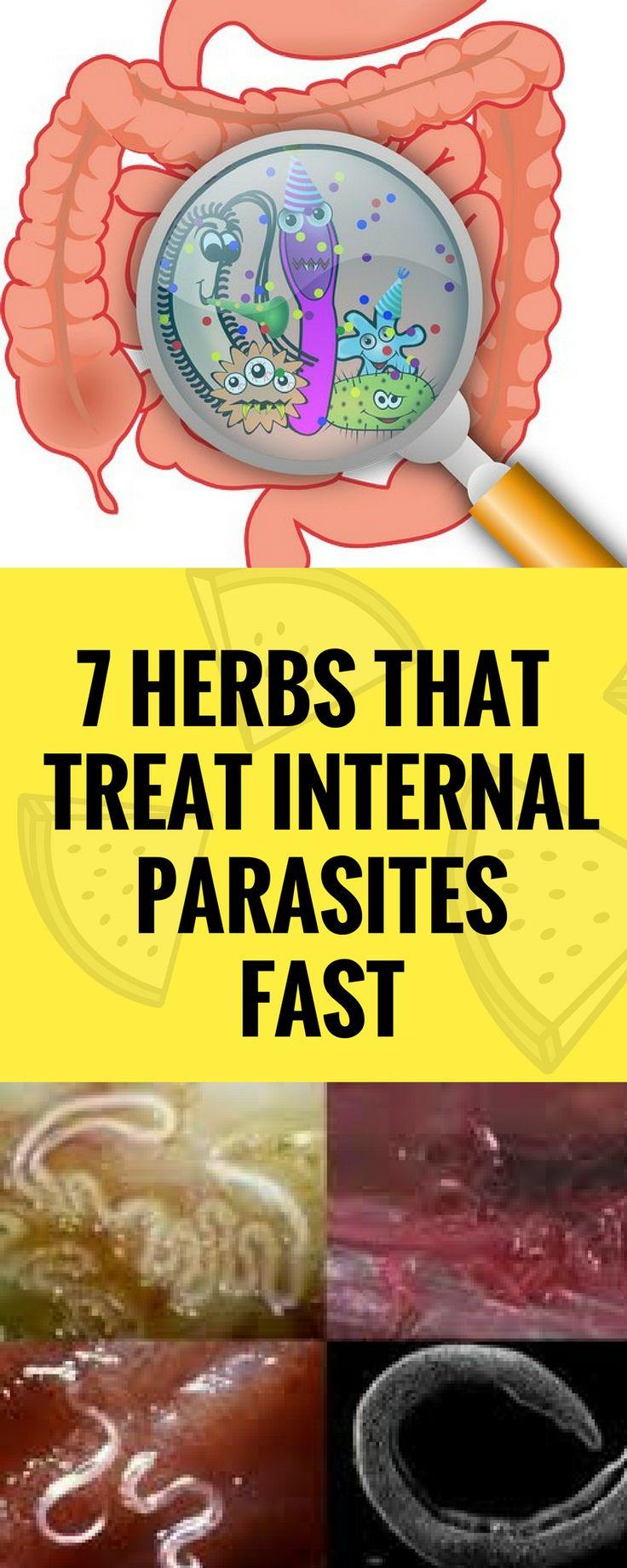 7 HERBS THAT TREAT INTERNAL PARASITES FAST`  ``