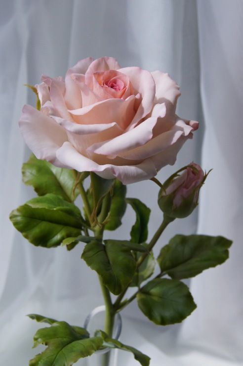 ....I give you many, many roses, so that more laughter, less tears, love shall reign law, plus a million kisses!   Roses made of special polymer clay for sculpting flowers.