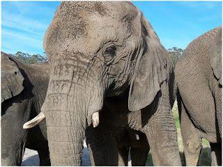 DD on the Blog...: Meeting the Elephants