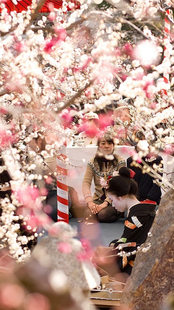 At Kitano Tenmangu Shrine, Kyoto, the highlight of the Baika-sai (Plum Festival) is an outdoor tea ceremony performed by the maiko and geiko of nearby Kamishichiken.