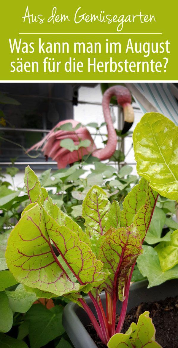 Welches Gemüse kann man für den Herbst im August säen
