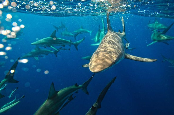 Watch: Shark TV Fest Hilariously Admits It's a Blatant Shark Week Rip-Off