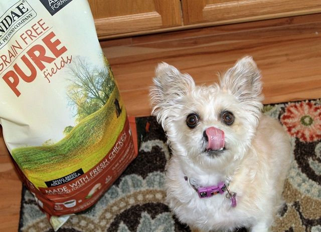 CANIDAE® Grain-Free Pure Dog Food #HealthyPetHappyPet Prime Beauty Blog #ad