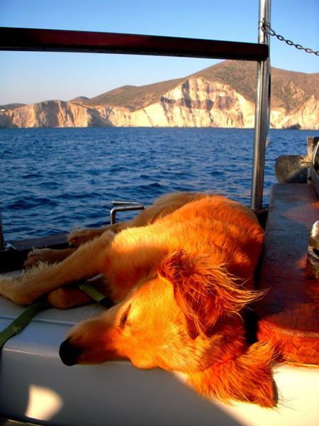 Poseidon The Great... and the lazy dog!!! Antiparos, Cyclades - by Sylvia