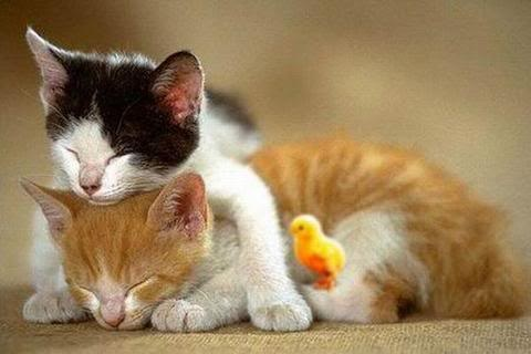 smile.: Funny Cat, Sleep Animal, Crazy Cat, Naps Time, Couple Pictures, Funny Animal, Sweet Dreams, Adorable Animal, Cat Photos