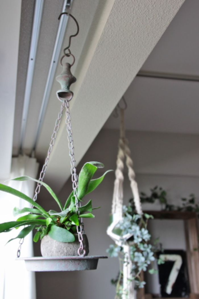 新発想 植物はぶら下げるのもあり 空間を上手に使ったグリーン活用術