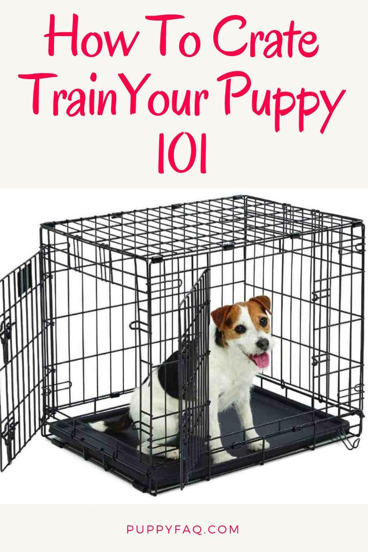 Crate Training Is One Of The Most Effective Ways Of Housetraining