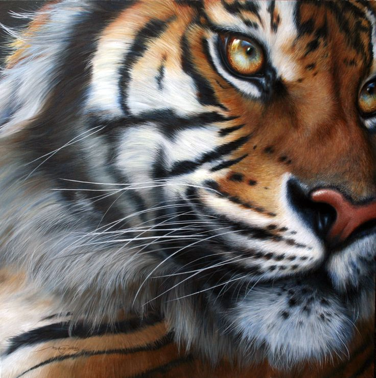Michelle Caitens - Australian wildlife artist. 'In Respect of the Tiger', #OilPainting #BengalTiger #WildlifeArt