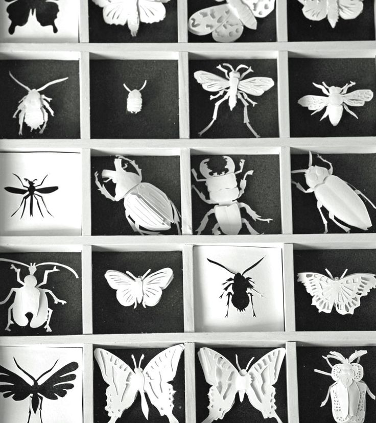 Stunning papercutting by Maria McLauchlan. Cutting symmetry, then Folding apart - the togetherness of collections maybe?