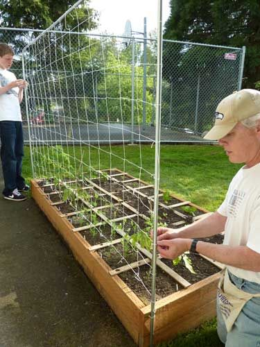 You can buy a tomato trellis kit or build your own and