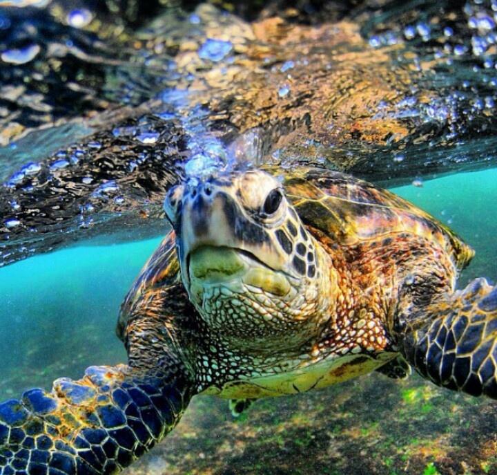 Clark Little photography - turtle