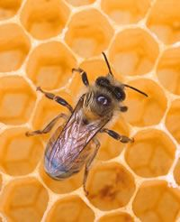 Honing masker, scrub, lotion cosmetica zelf maken | Rubriek.nl