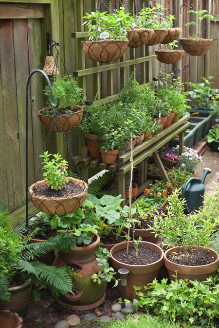Al's Garden Center staff shares gardening tips via workshops, seminars, and special events. Then, get all the supplies you need for your dream garden.